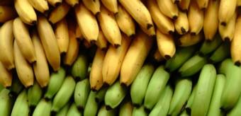 Bananas são radioativas (e inofensivas)
