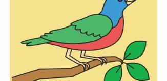 card com pássaro colorido