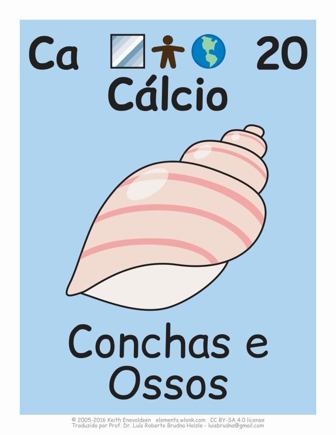 elemento químico cálcio presente em conchas